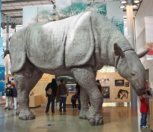 Paraceratherium.jpg